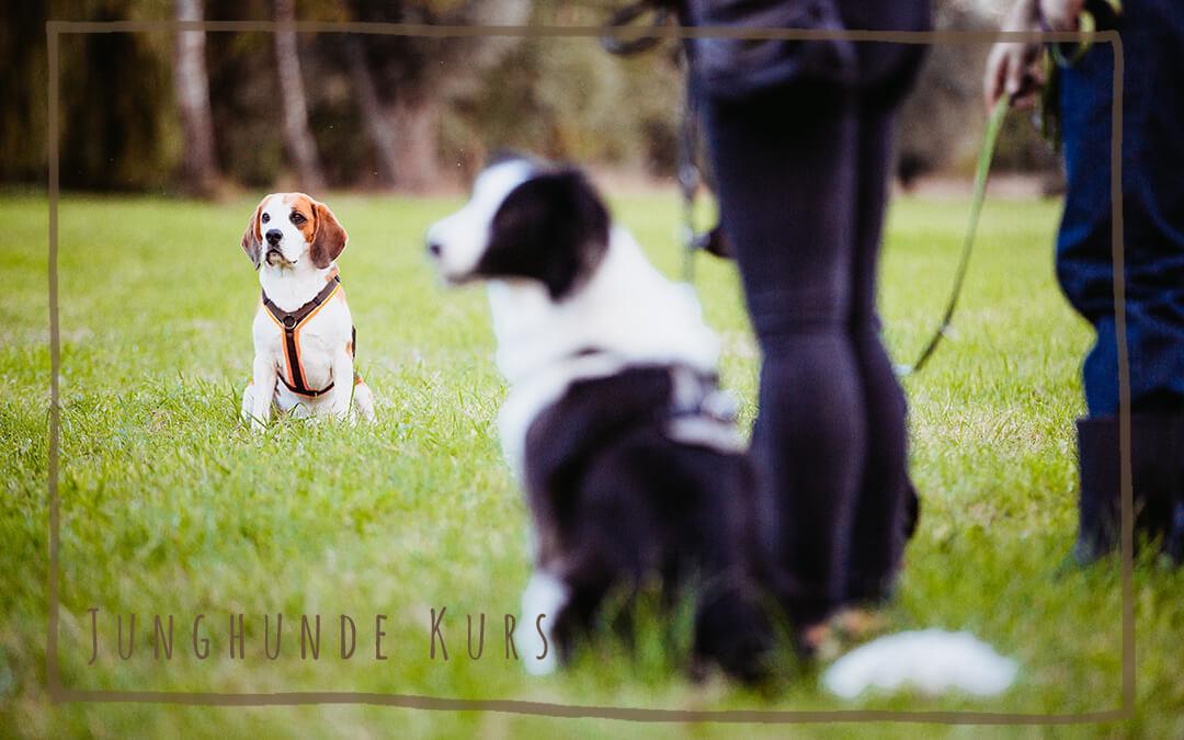 Junghunde-Training