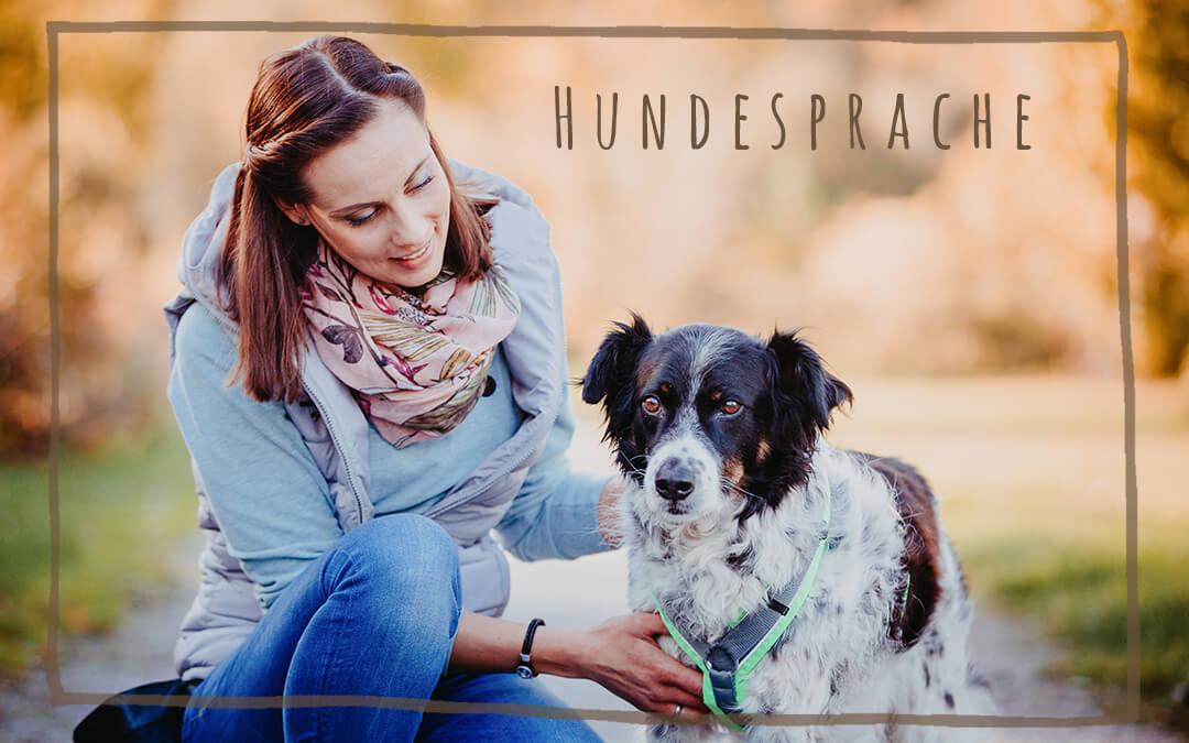 Wochenendseminar: Die Körpersprache der Hunde