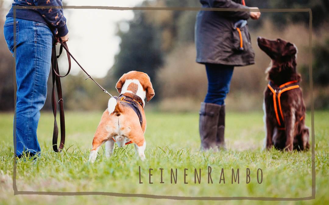 Leinenrambo – Intensivtrainingswochenende
